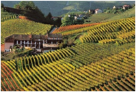 Agriculture in Piedmont